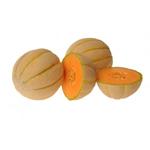 Eastern Cantaloupe